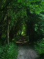 Le Vert Buisson