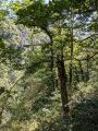 Boucle du viaduc des Rochers Noirs à Soursac