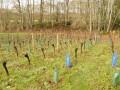 Le vignoble d'Auteuil