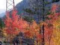 Le Bois de France en automne.
