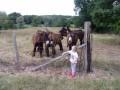 Les ânes du domaine la source
