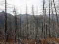 Les arbres brûlés