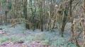 Les eaux secrètes du Suran