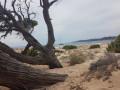 Les bosquets a l'ombre : une vue de reve sur la Plage Erbaghu.