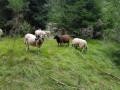 Autour des Puys de la Vache, de la Mey et de Mercoeur