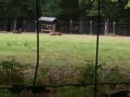 Les cervidés du parc animalier de la forêt de Grimbosq