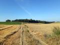 Les champs d'Auvers