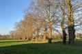 Les chênes du parc des Mézières