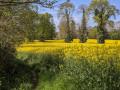 Les couleurs du printemps.