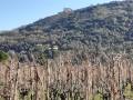 Dans les vignes de Saint-Péray