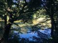 Les étangs Gründel