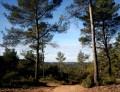 Le tour de la Forêt de Valabre