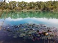 Les nénuphars du Lac des Iscles
