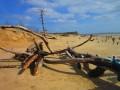 les restes des pins mangés par la mer !!