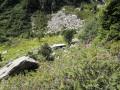 Les ruines de la Frèche