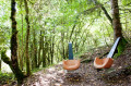 Les sièges des bois