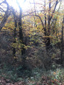 Les sous-bois d'automne
