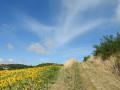 Les tournesols animent le chemin en été