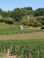 les vignes à Saint gengoux
