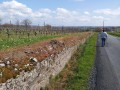 Les vignes au dessus de Chalonnes sur Loire