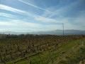 Des vignobles du Beaujolais aux bois d'Alix, autour de Bagnols