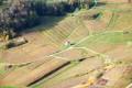 Les vignes autour de Château Chalon