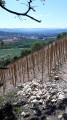 Les vignes de Brezème sur les collines de Livron