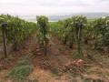 Vignes, champs et bois, crêtes et vallons de Montgueux et Macey