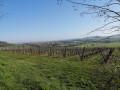 À la découverte de Vic-sur-Seille depuis Château-Salins