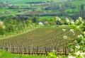 Les vignes du Montsaugeonnais