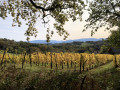 Les vignes en Octobre