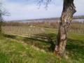 Les vignes en surplomb de Loire
