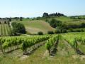 Les vignes très présentes dans le paysage