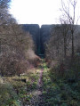 Randonnée en forêt d'Eawy sur les traces des bombes volantes