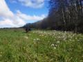 Petite boucle dans les bois de Brizambourg