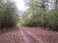 Longue ligne droite en forêt domaniale