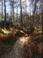 Lumière et couleurs - forêt de Fontainebleau