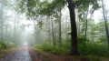Magie des arbres sous la pluie