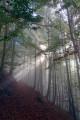 Magnifique forêt