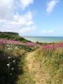 Magnifique paysage fleuri