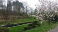 Magnolia au bord du canal