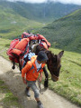 Make way for the packhorse