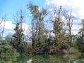 Marais central depuis l'observatoire hexagonal