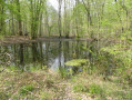 Mare en forêt de Villefermoy