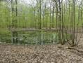 Mare en forêt