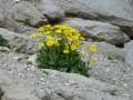 Marguerites au lac des 9 couleurs