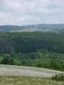 Marguerites et éoliennes