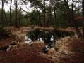 Balade dans le Nord de la Forêt de Fontainebleau
