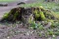 Le Sentier des Bunkers de la 1ère Guerre Mondiale de Burnhaupt-le-Bas
