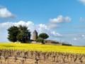 Entre Sèvre Nantaise, vignes et moulins
